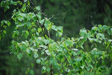 4732雨濡れる
