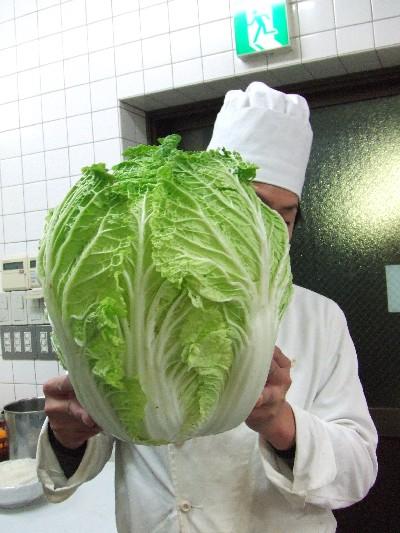 どでか白菜