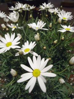 04.12.2010.名花 006