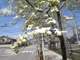 04.28.2010.名花 004