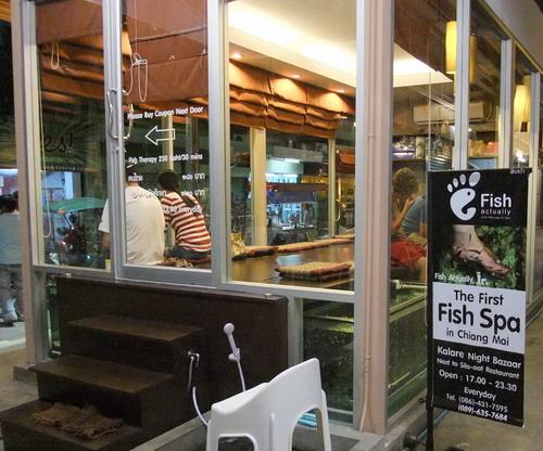 1-Fish Spa2