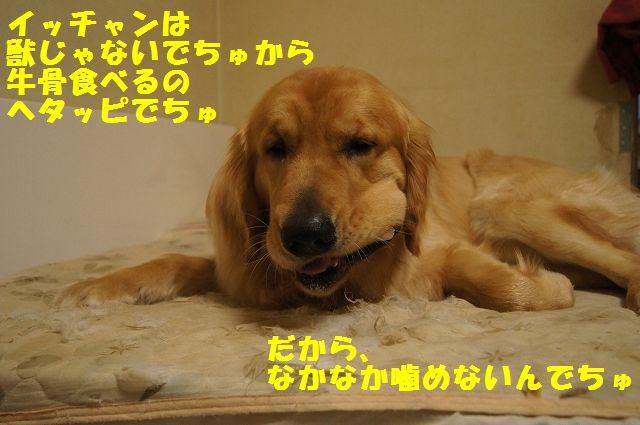 000005_20130302134009.jpg