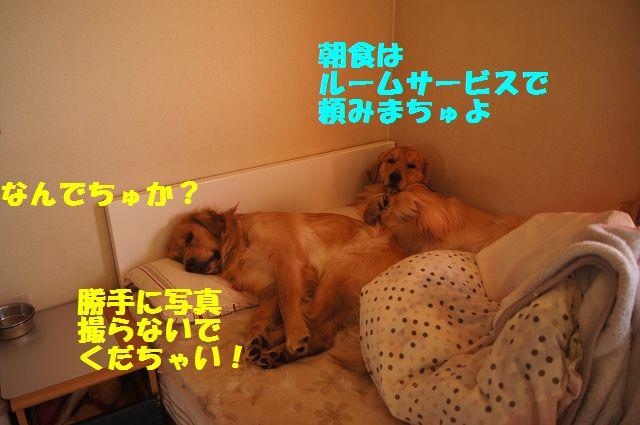 0002_20130226203411.jpg
