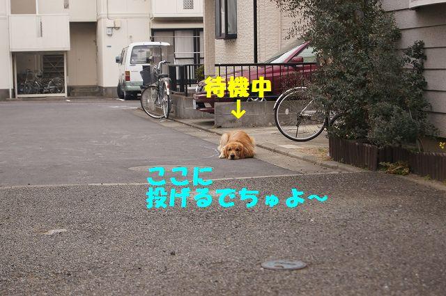 0007_20130218120811.jpg