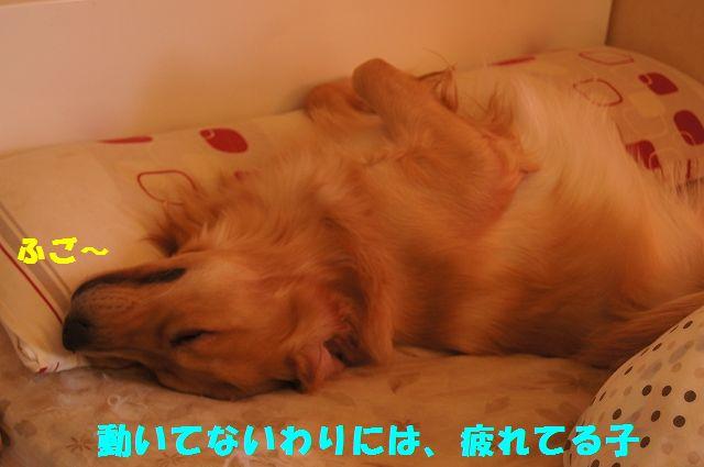 0007_20130226203425.jpg