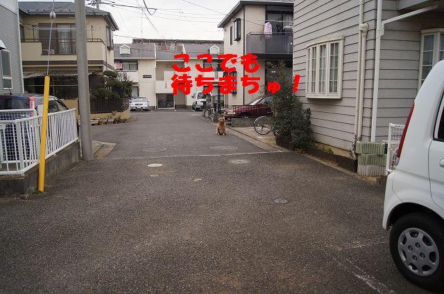 0011_20130218120827.jpg