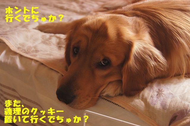 003_20130218071227.jpg