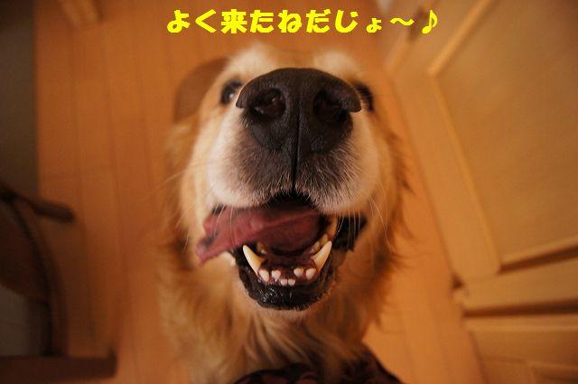 004_20130218071228.jpg