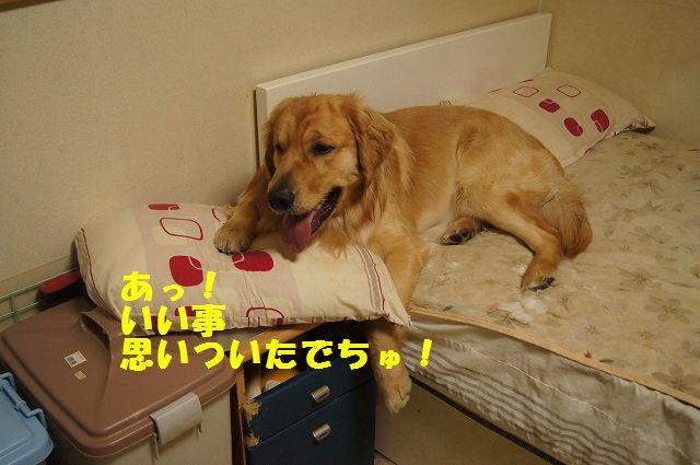 08_20130301185541.jpg
