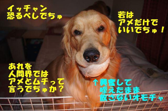 10_20130204031948.jpg