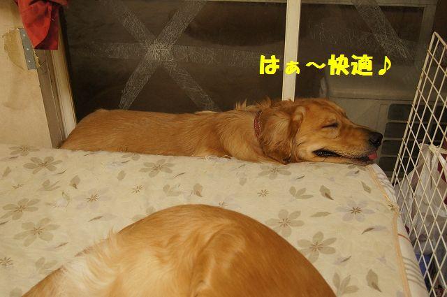 10_20130301185543.jpg