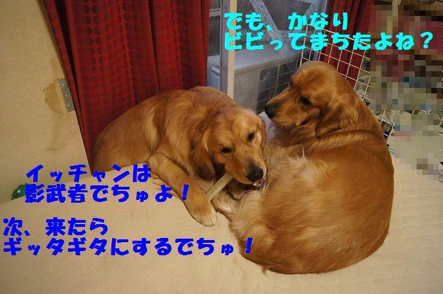 10_20130305045818.jpg