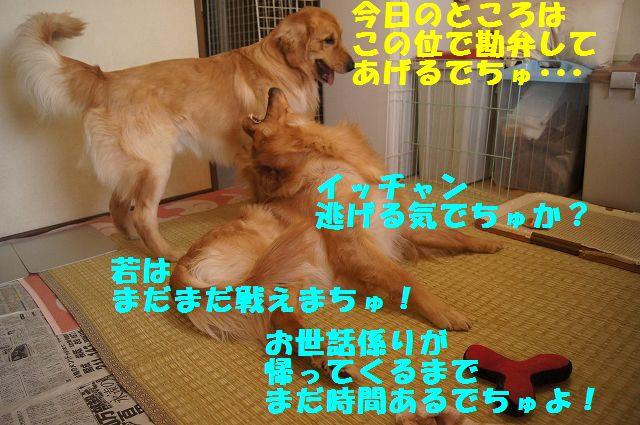 10_20130307185256.jpg