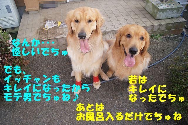 10_20130313164247.jpg