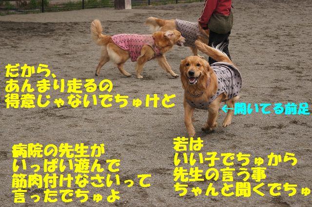 10_20130315170238.jpg