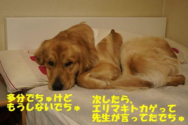 10_20130324045749.jpg