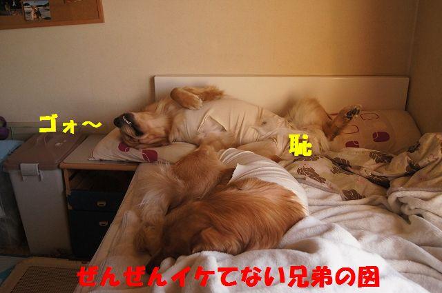 10_20130325083817.jpg