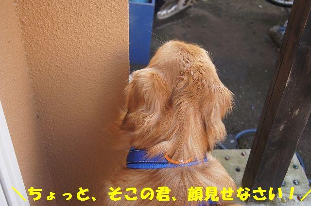 11_20130307014737.jpg