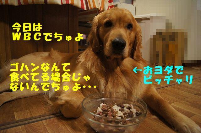 11_20130309064114.jpg