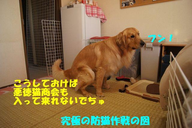 11_20130313051306.jpg