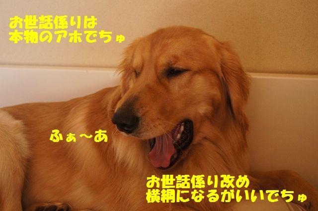11_20130314231651.jpg