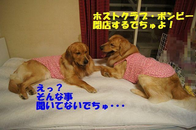 11_20130320215218.jpg