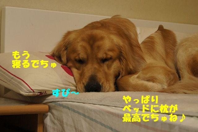 11_20130324045800.jpg