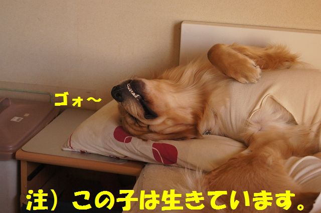 11_20130325083831.jpg
