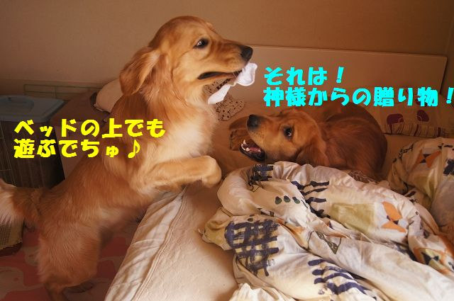 12_20130208185859.jpg