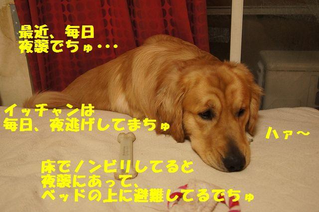 12_20130305045836.jpg
