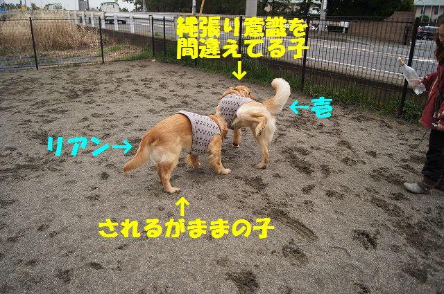 12_20130315170240.jpg