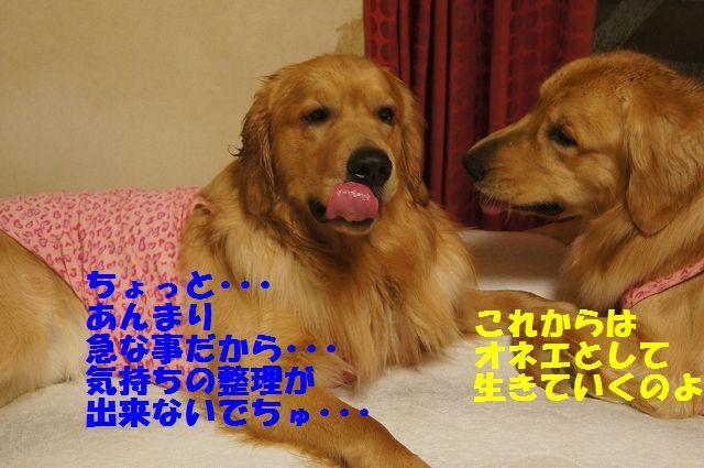 12_20130320215219.jpg