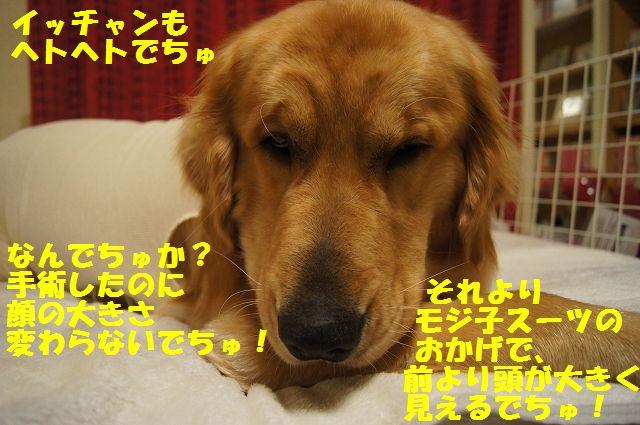 12_20130322152411.jpg