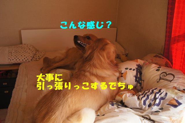 13_20130208185900.jpg