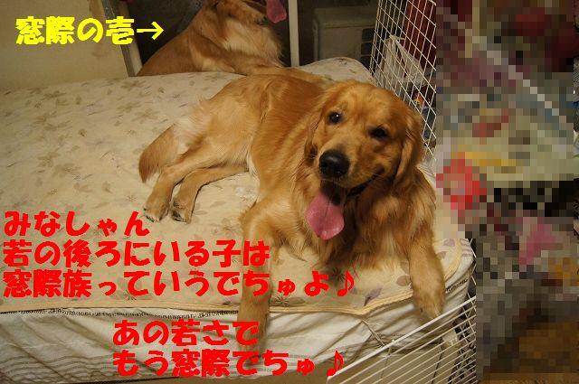 13_20130301185601.jpg