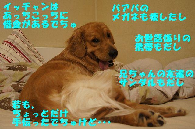 13_20130305045837.jpg