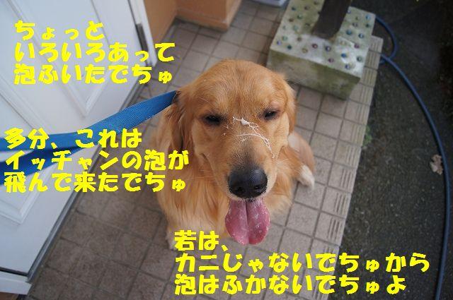 13_20130307013424.jpg