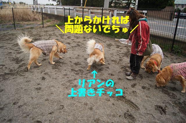 13_20130315170241.jpg