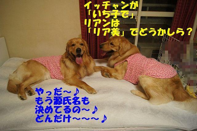 13_20130320215220.jpg