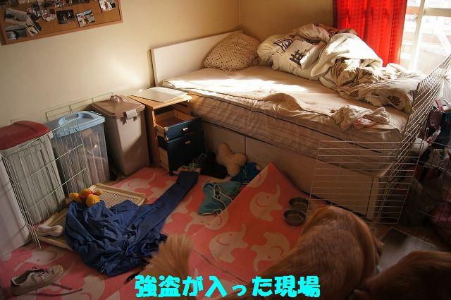 14_20130208185902.jpg