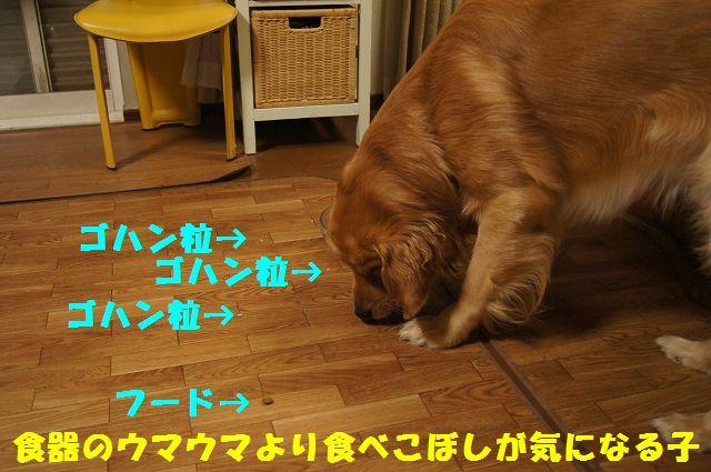 14_20130225223136.jpg