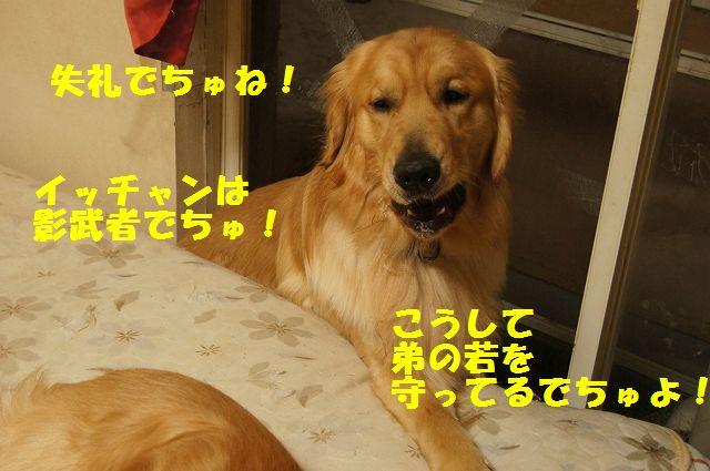 14_20130301185602.jpg