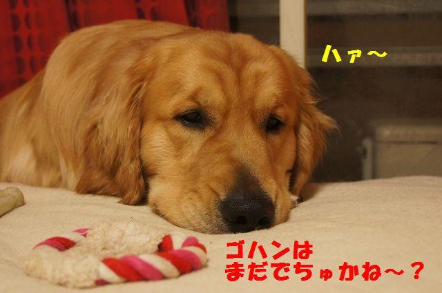 14_20130305045838.jpg