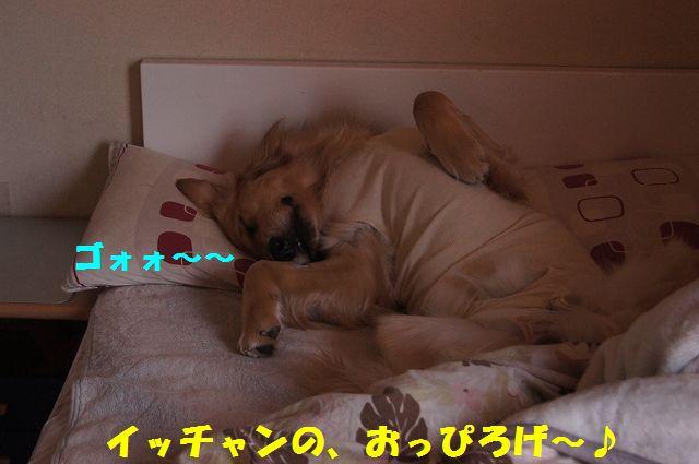 14_20130322152413.jpg