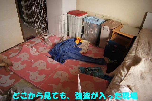 15_20130208185903.jpg