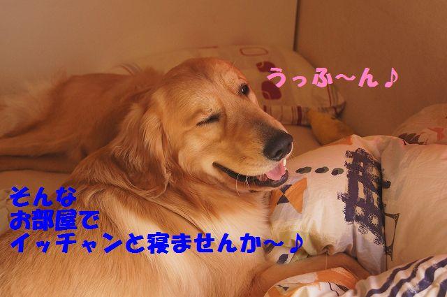 16_20130208200044.jpg