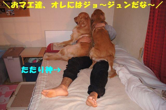 1_20130204031719.jpg