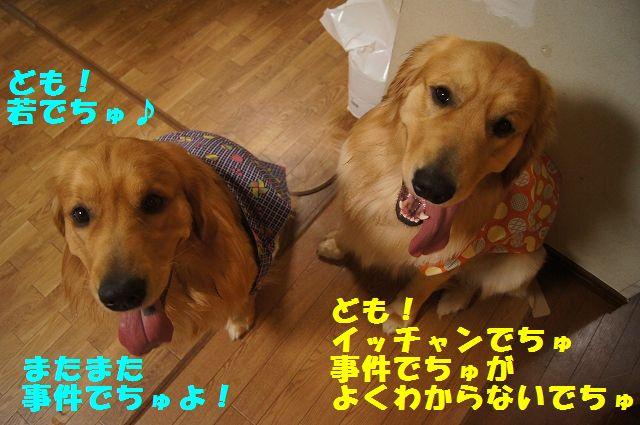1_20130208185826.jpg