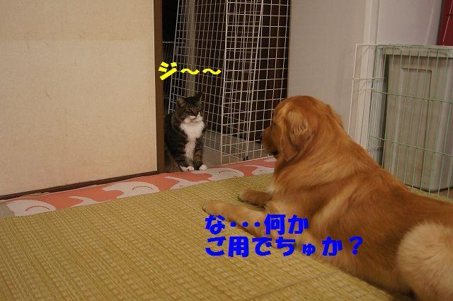 1_20130305045752.jpg