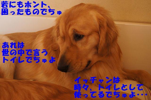 1_20130307185157.jpg